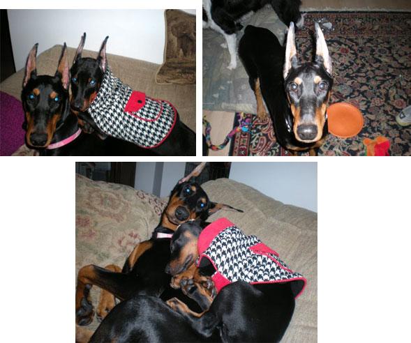 Dog Training Egremont